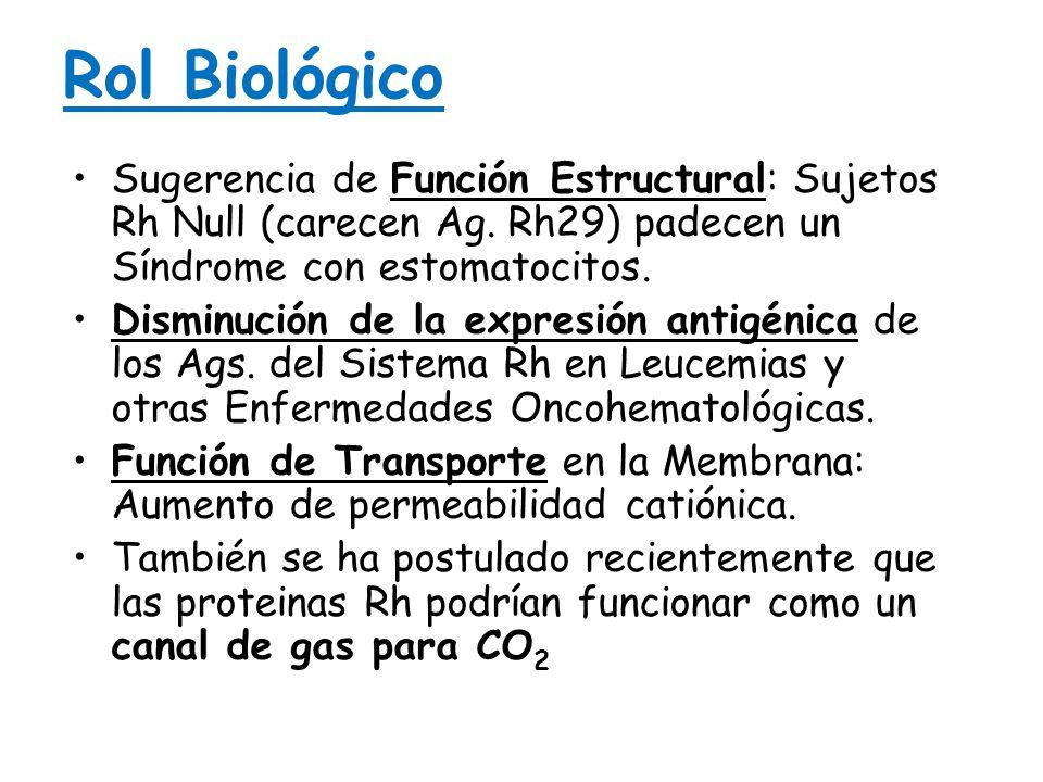 Rol Biológico Sugerencia de Función Estructural: Sujetos Rh Null (carecen Ag. Rh29) padecen un Síndrome con estomatocitos.