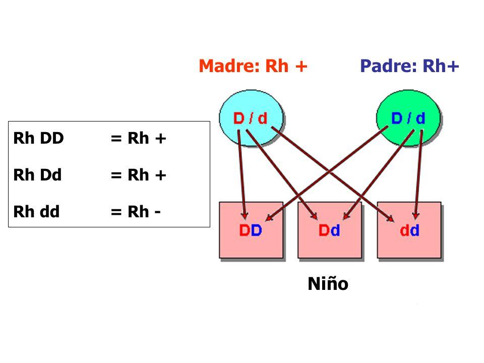 Madre: Rh + Padre: Rh+ Rh DD = Rh + Rh Dd = Rh + Rh dd = Rh - Niño