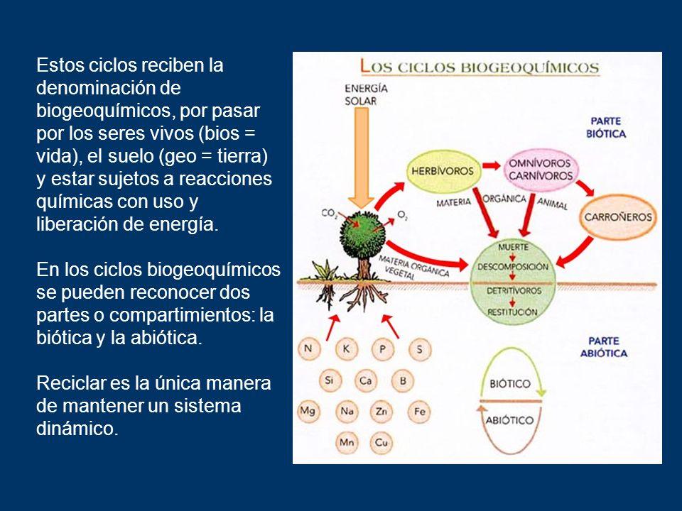 Estos ciclos reciben la denominación de biogeoquímicos, por pasar por los seres vivos (bios = vida), el suelo (geo = tierra) y estar sujetos a reacciones químicas con uso y liberación de energía.