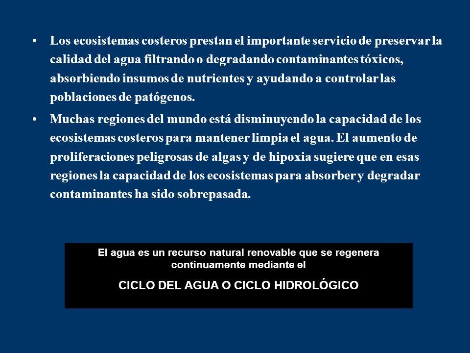 CICLO DEL AGUA O CICLO HIDROLÓGICO