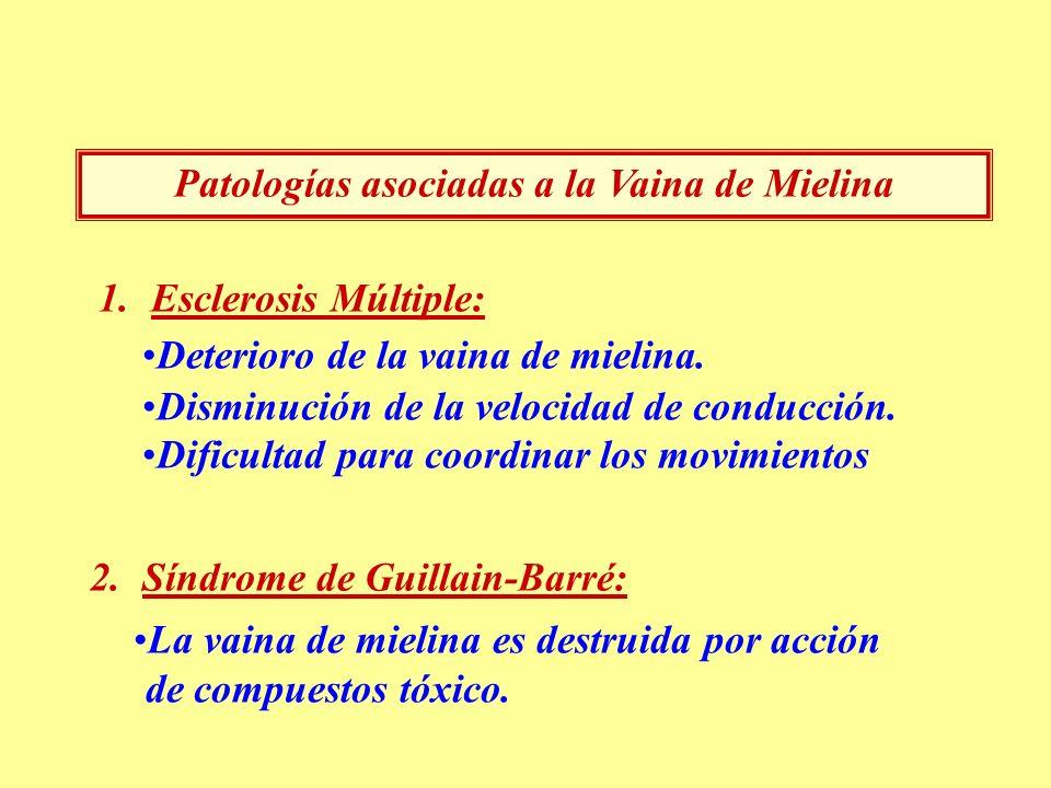Patologías asociadas a la Vaina de Mielina