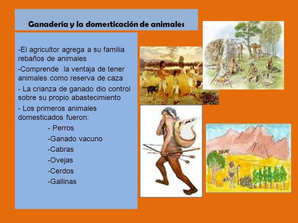 Ganadería y la domesticación de animales