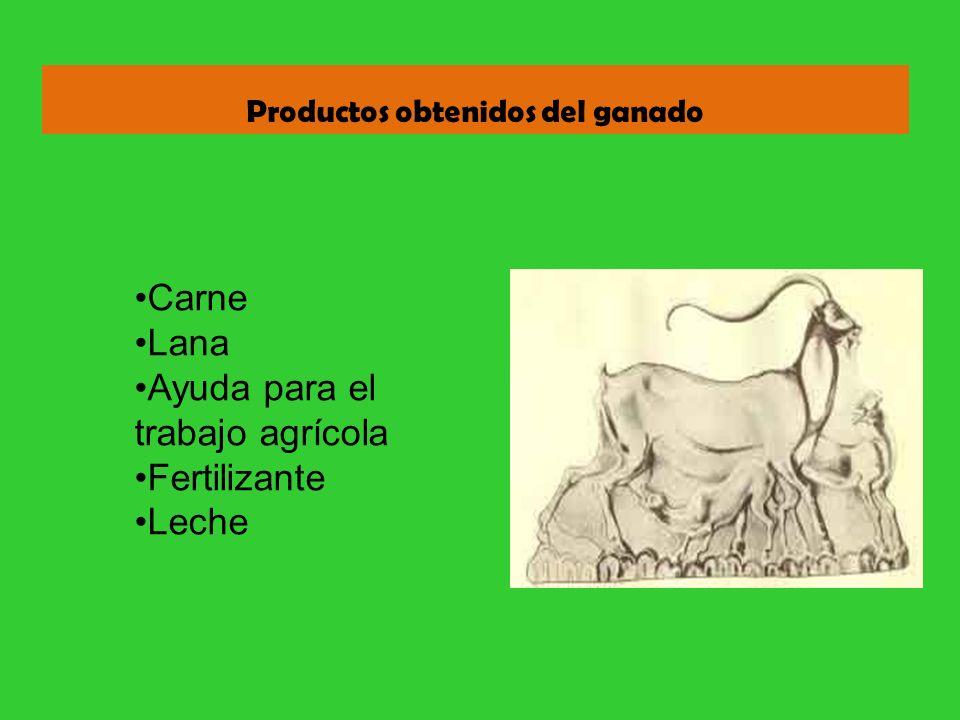 Productos obtenidos del ganado