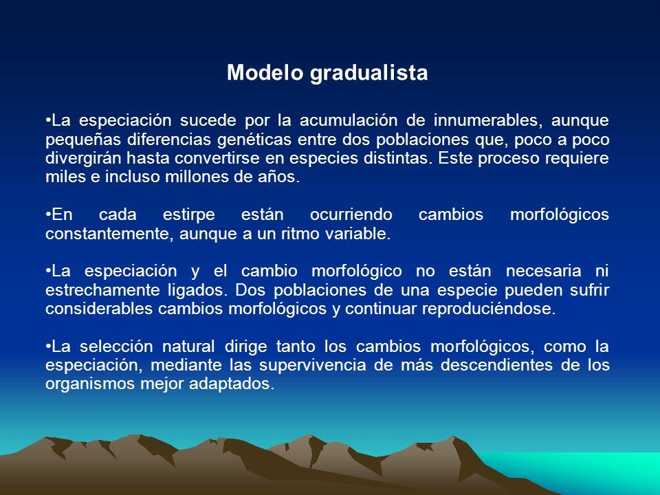 Modelo gradualista