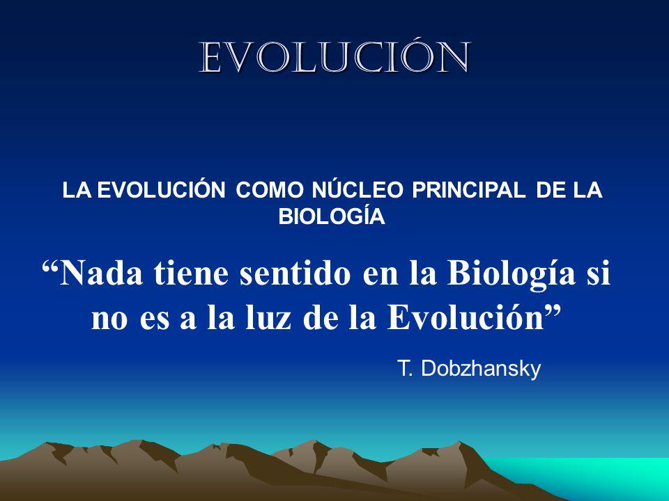 Evolución LA EVOLUCIÓN COMO NÚCLEO PRINCIPAL DE LA BIOLOGÍA. Nada tiene sentido en la Biología si no es a la luz de la Evolución