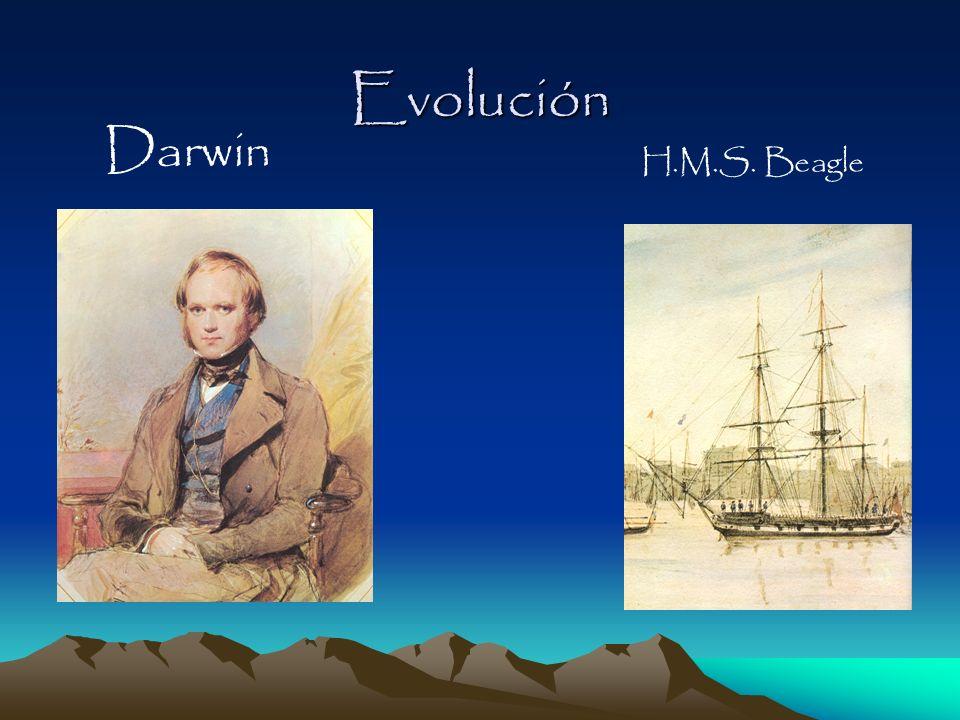 Evolución Darwin H.M.S. Beagle