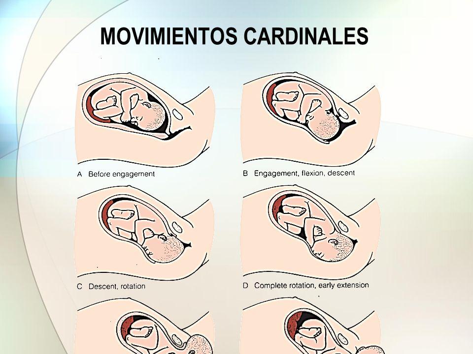 MOVIMIENTOS CARDINALES
