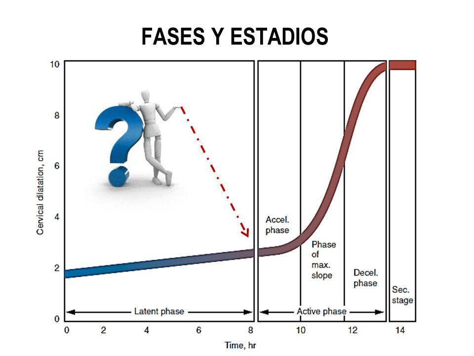FASES Y ESTADIOS