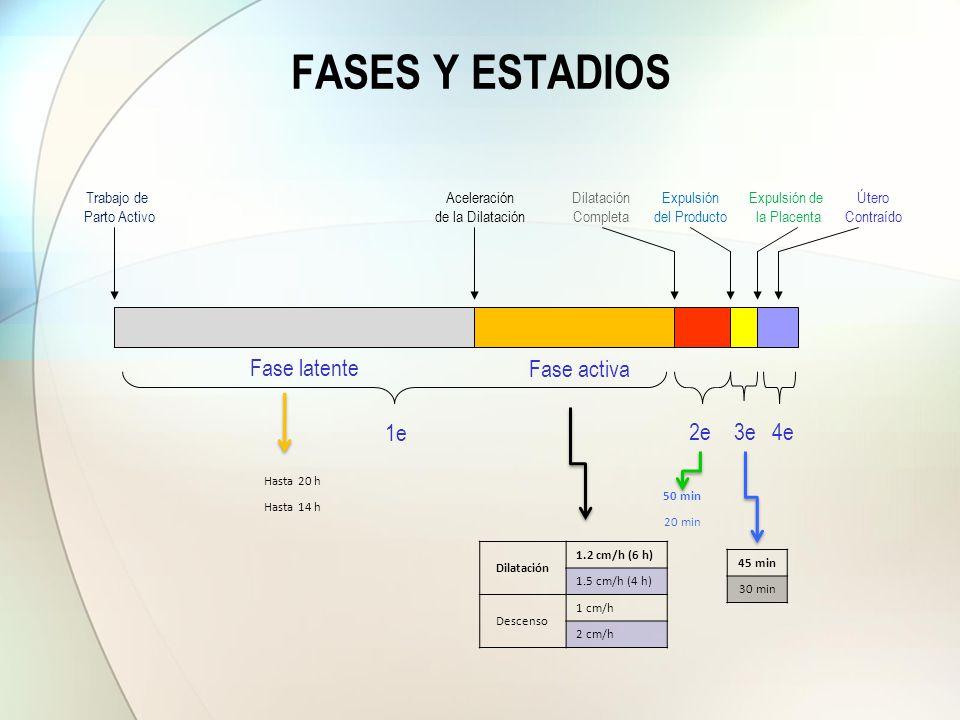 FASES Y ESTADIOS Fase latente Fase activa 1e 2e 3e 4e Dilatación
