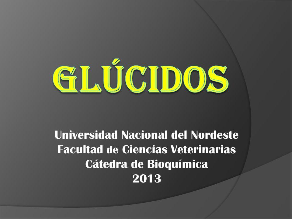 GLÚCIDOS Universidad Nacional del Nordeste