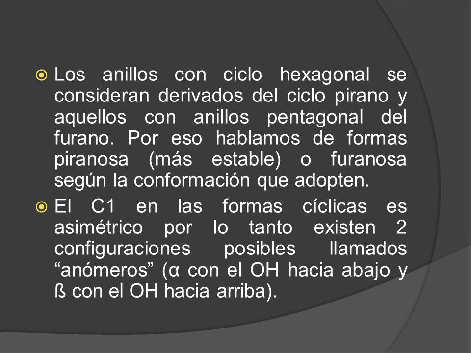 Los anillos con ciclo hexagonal se consideran derivados del ciclo pirano y aquellos con anillos pentagonal del furano. Por eso hablamos de formas piranosa (más estable) o furanosa según la conformación que adopten.