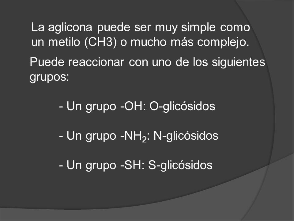 La aglicona puede ser muy simple como un metilo (CH3) o mucho más complejo.