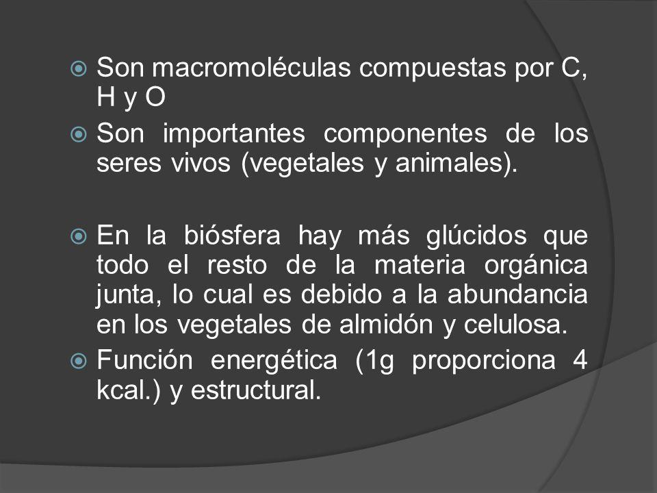 Son macromoléculas compuestas por C, H y O