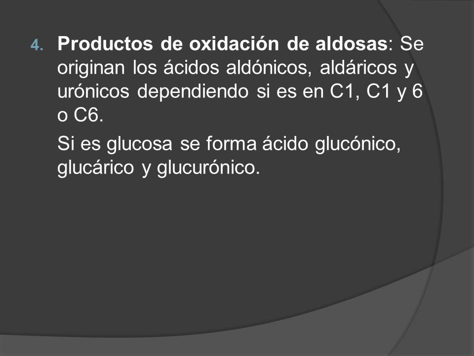 Productos de oxidación de aldosas: Se originan los ácidos aldónicos, aldáricos y urónicos dependiendo si es en C1, C1 y 6 o C6.