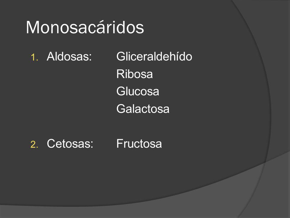 Monosacáridos Aldosas: Gliceraldehído Ribosa Glucosa Galactosa