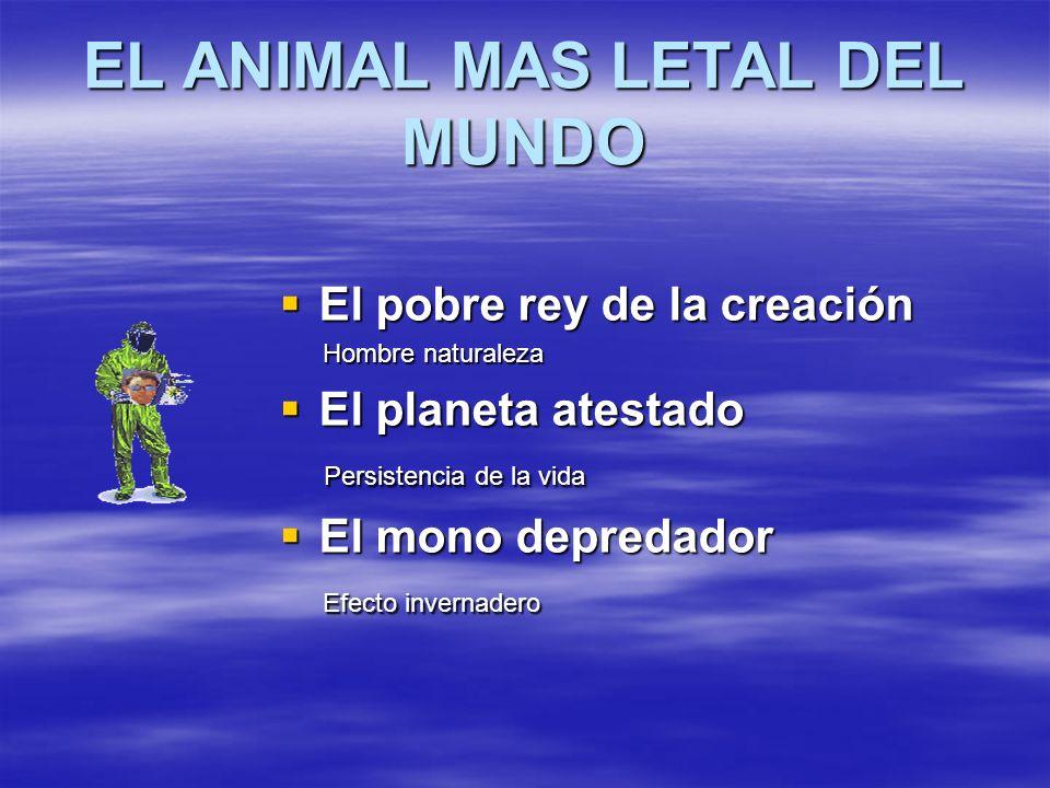 EL ANIMAL MAS LETAL DEL MUNDO