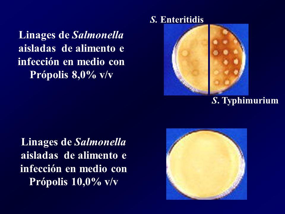 S. Enteritidis Linages de Salmonella aisladas de alimento e infección en medio con Própolis 8,0% v/v.