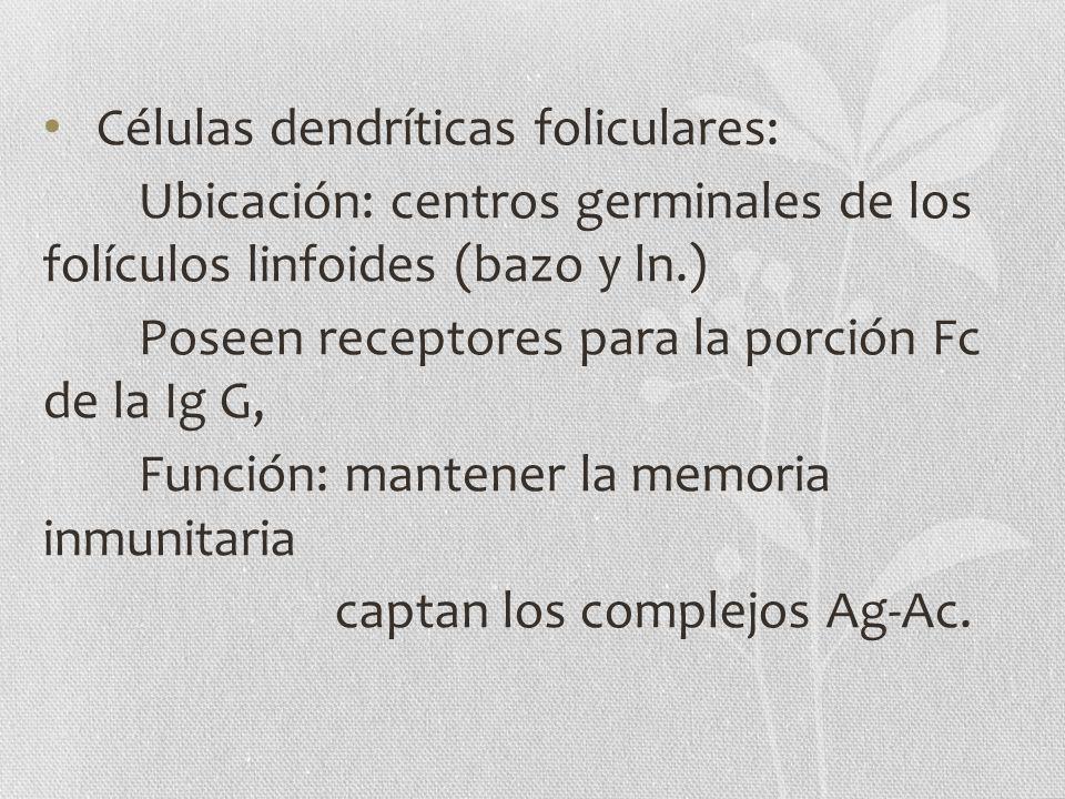Células dendríticas foliculares: