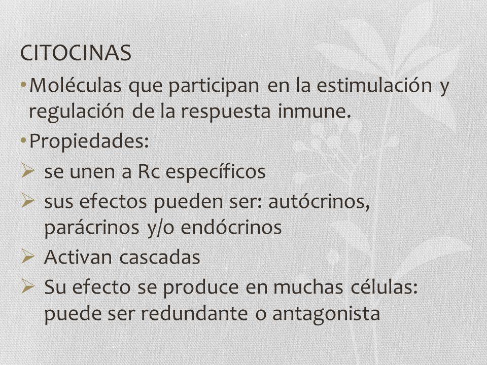 CITOCINAS Moléculas que participan en la estimulación y regulación de la respuesta inmune. Propiedades: