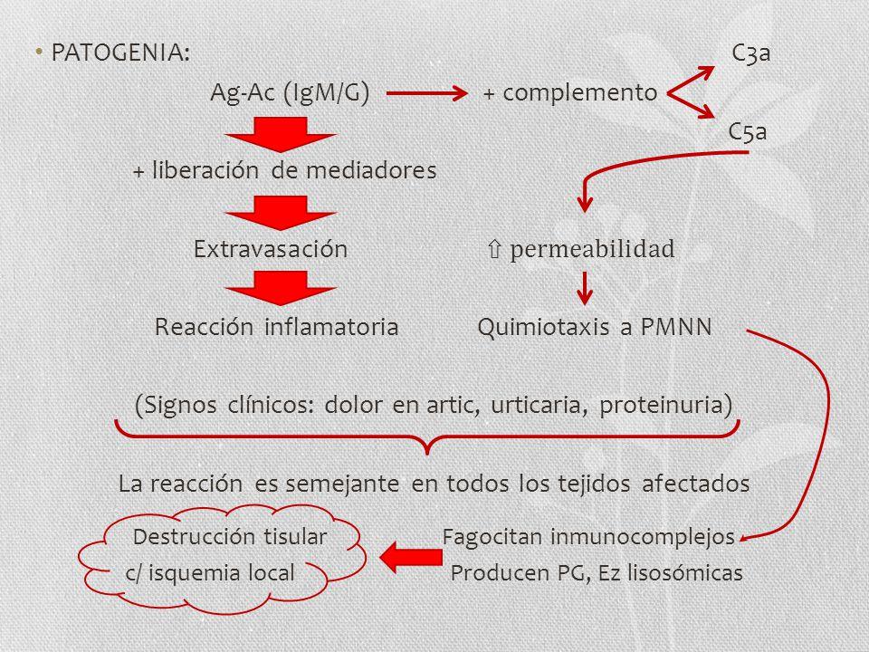 Ag-Ac (IgM/G) + complemento C5a + liberación de mediadores