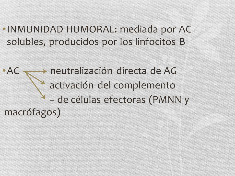 INMUNIDAD HUMORAL: mediada por AC solubles, producidos por los linfocitos B