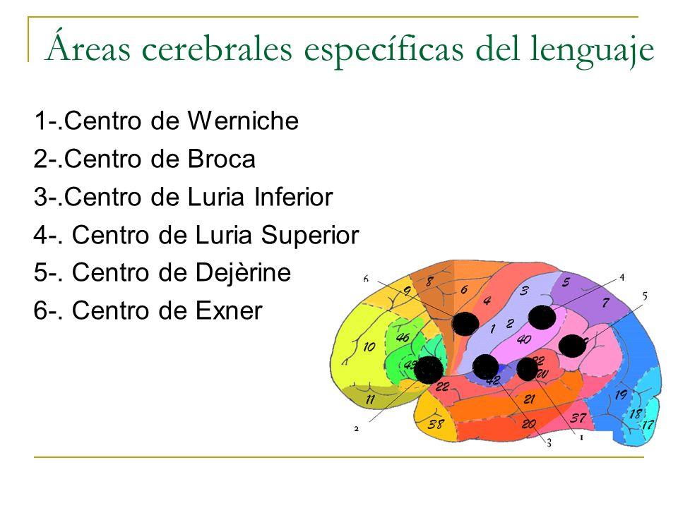 Áreas cerebrales específicas del lenguaje