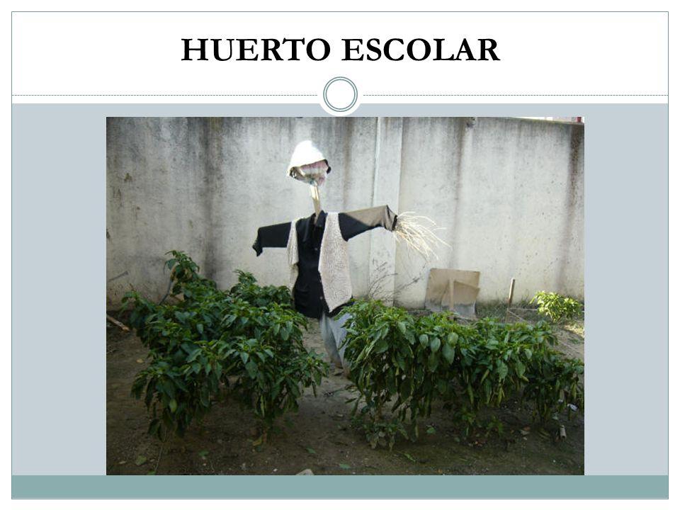 HUERTO ESCOLAR
