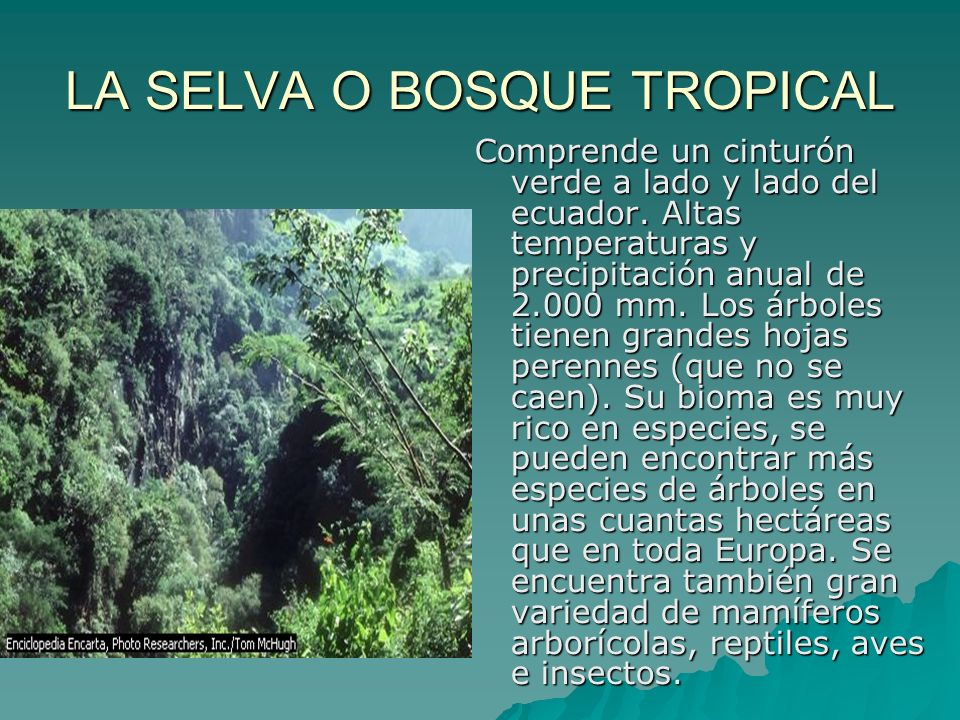 LA SELVA O BOSQUE TROPICAL