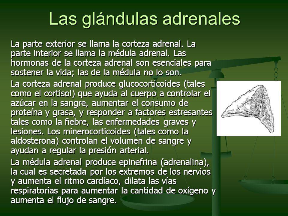 Las glándulas adrenales
