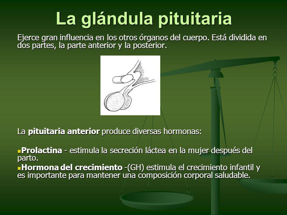 La glándula pituitaria