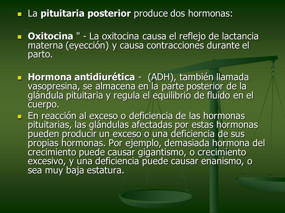 La pituitaria posterior produce dos hormonas: