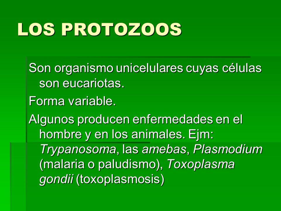 LOS PROTOZOOS Son organismo unicelulares cuyas células son eucariotas.
