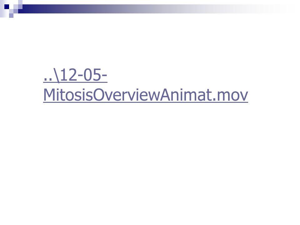 ..\12-05-MitosisOverviewAnimat.mov