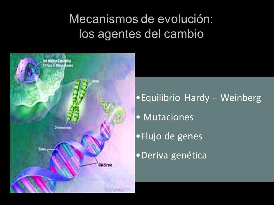 Mecanismos de evolución: