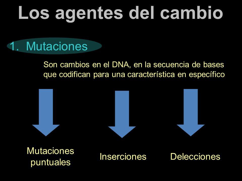 Los agentes del cambio 1. Mutaciones Mutaciones puntuales Inserciones