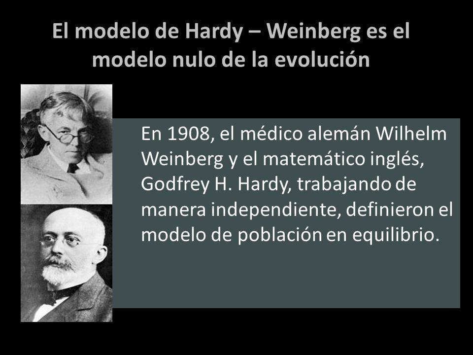 El modelo de Hardy – Weinberg es el modelo nulo de la evolución