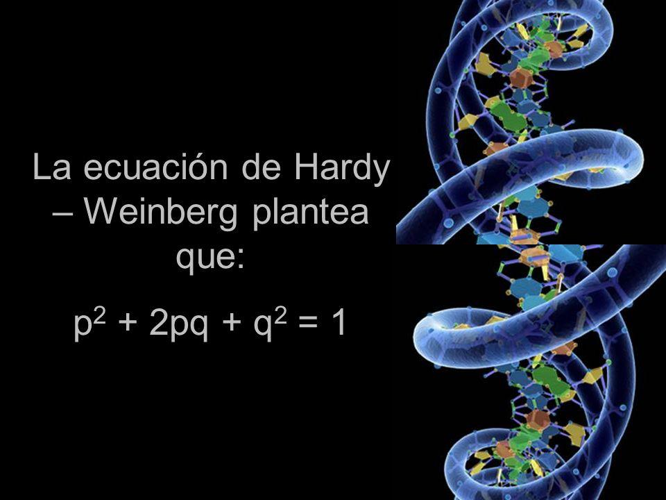 La ecuación de Hardy – Weinberg plantea que: