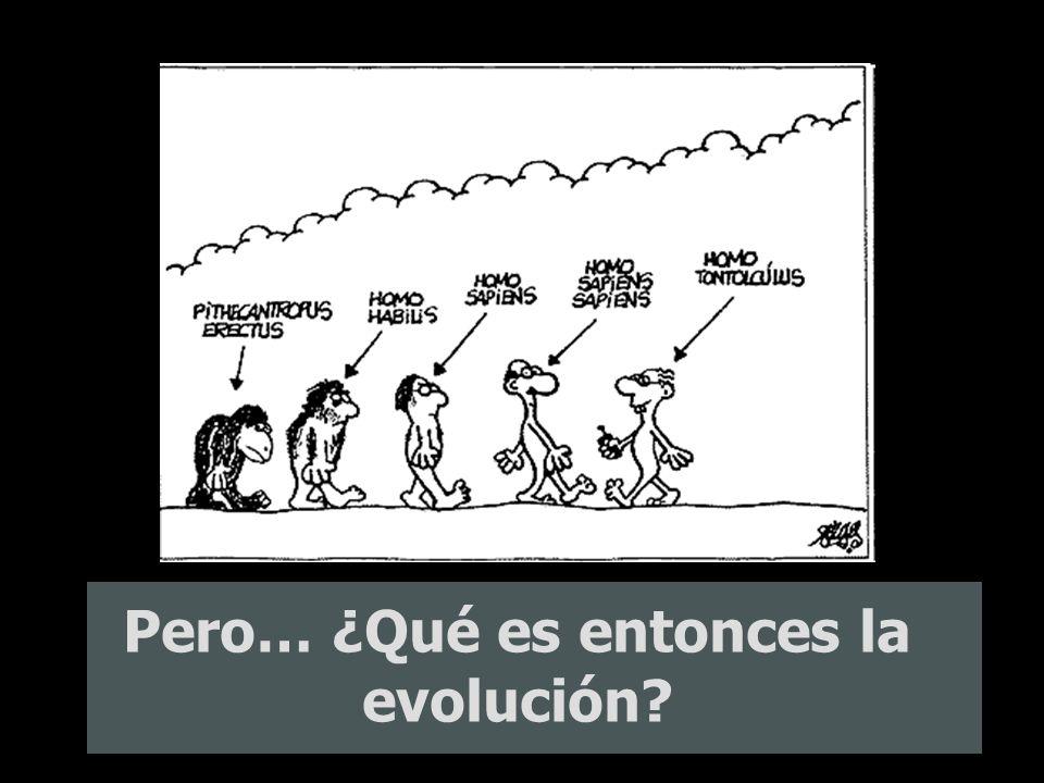 Pero… ¿Qué es entonces la evolución