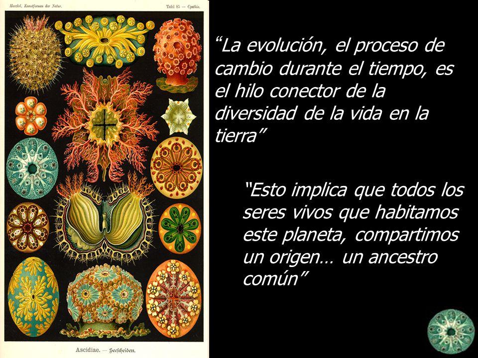 La evolución, el proceso de cambio durante el tiempo, es el hilo conector de la diversidad de la vida en la tierra