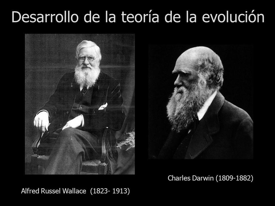 Desarrollo de la teoría de la evolución