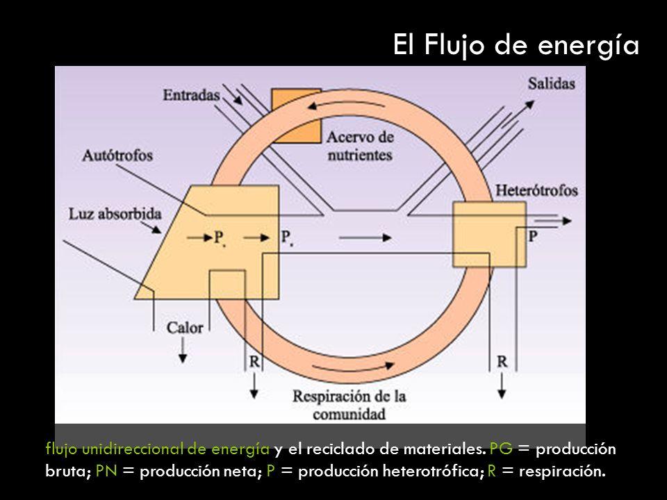 El Flujo de energía