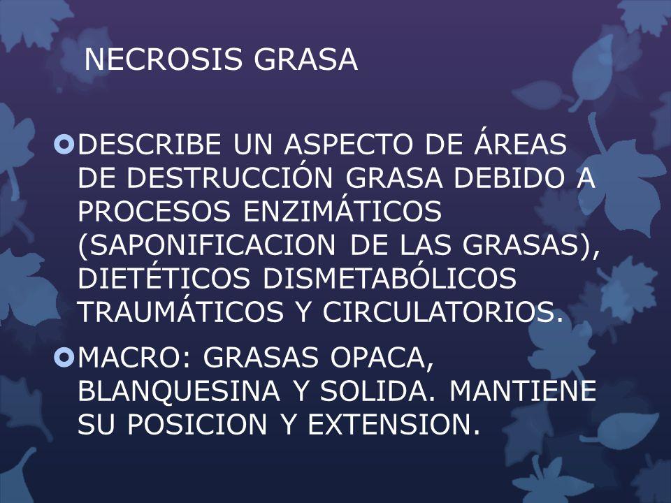 NECROSIS GRASA