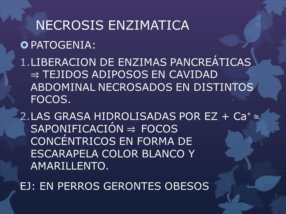 NECROSIS ENZIMATICA PATOGENIA: