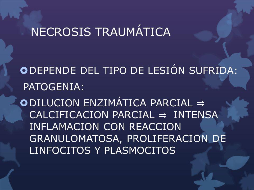 NECROSIS TRAUMÁTICA DEPENDE DEL TIPO DE LESIÓN SUFRIDA: PATOGENIA: