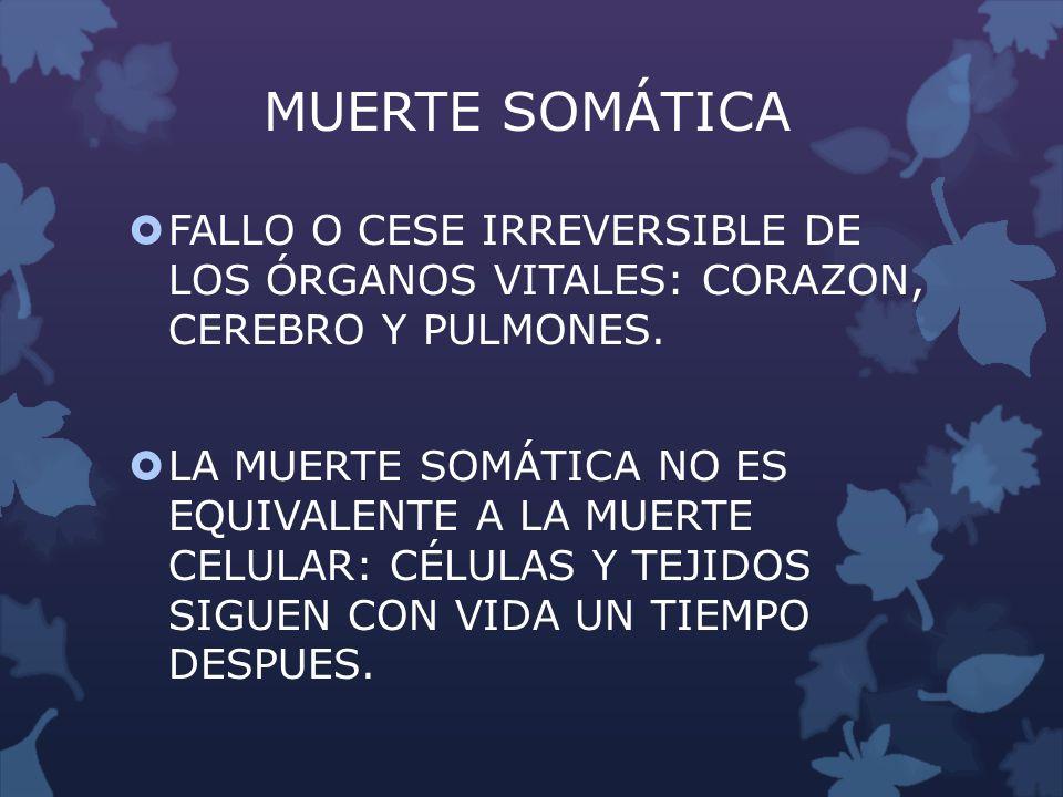MUERTE SOMÁTICA FALLO O CESE IRREVERSIBLE DE LOS ÓRGANOS VITALES: CORAZON, CEREBRO Y PULMONES.