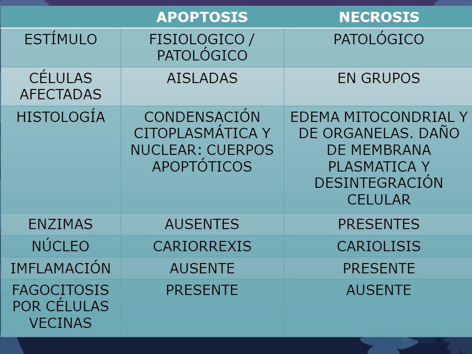 FISIOLOGICO / PATOLÓGICO PATOLÓGICO CÉLULAS AFECTADAS AISLADAS
