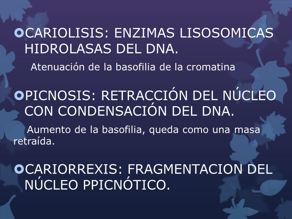 CARIOLISIS: ENZIMAS LISOSOMICAS HIDROLASAS DEL DNA.