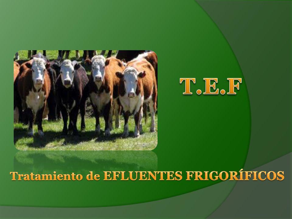 T.E.F Tratamiento de EFLUENTES FRIGORÍFICOS