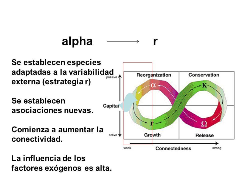 alpha r Se establecen especies adaptadas a la variabilidad externa (estrategia r) Se establecen asociaciones nuevas.