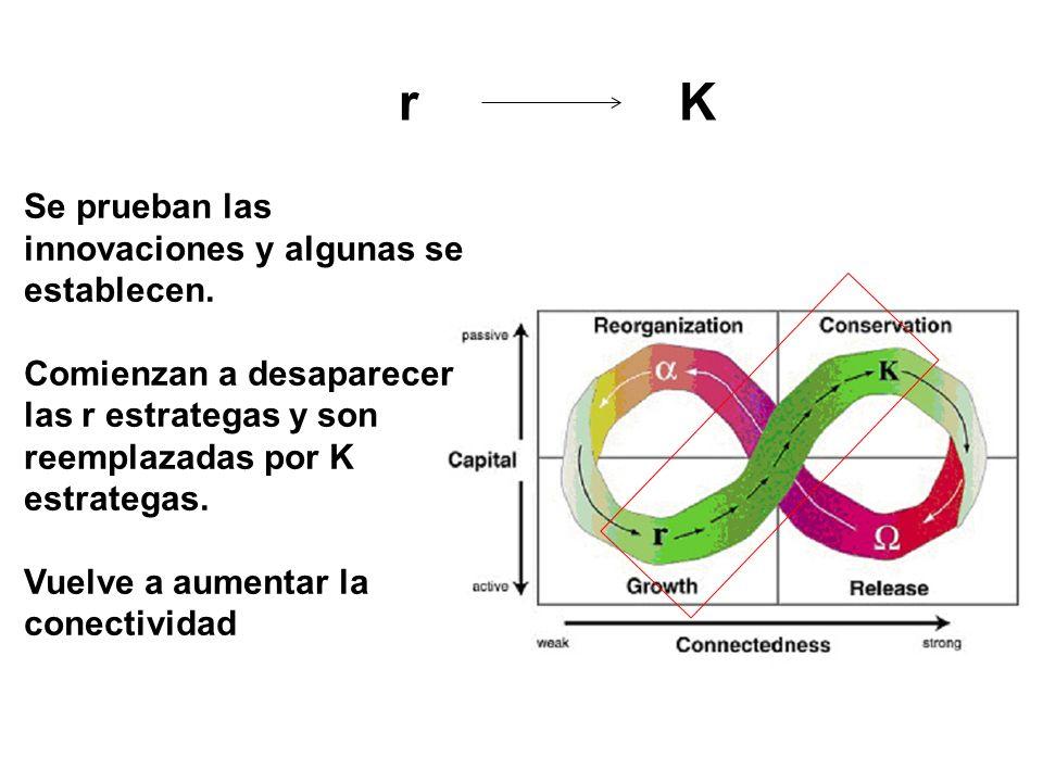 r K Se prueban las innovaciones y algunas se establecen.